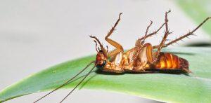 Pest Control Scottsdale